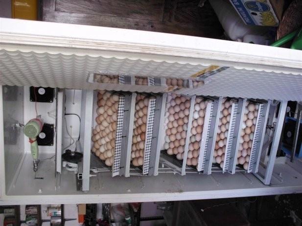 digitalni-termostat-wh7016e-valionik-inkubator-akvarij-0.1c-slika-24078821